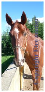Prix d'un cheval et de son équipement - Coût d'entretien d'un cheval